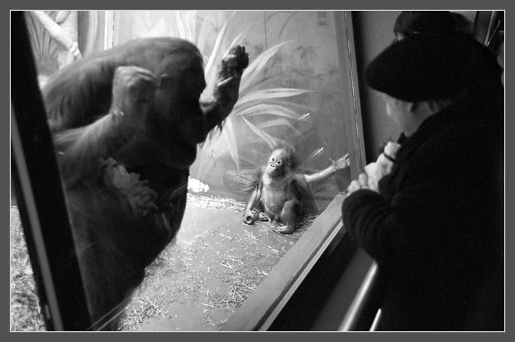 """фото """"- Мама, кто это?.."""" метки: жанр, природа, дикие животные"""