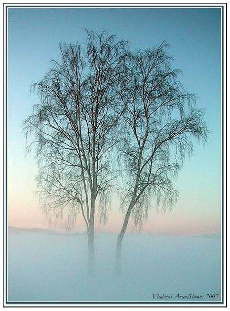 """фото """"Берёзки"""" метки: пейзаж, зима"""