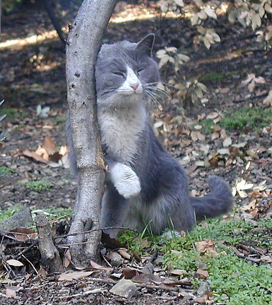 "photo ""Toady (CATalog)"" tags: nature, pets/farm animals, wild animals"