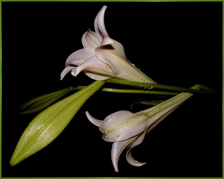 """фото """"*****"""" метки: природа, цветы"""