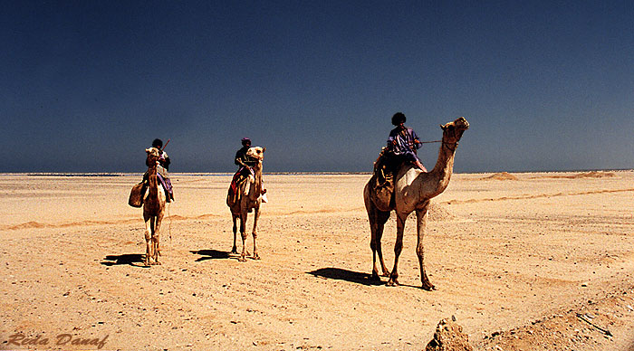 "photo ""Camel Riders"" tags: travel, landscape, Africa"