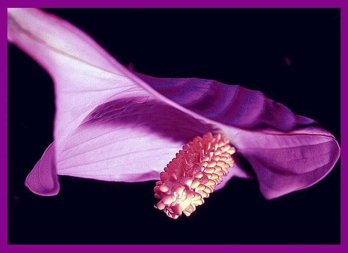 """фото """"Полет к свободе"""" метки: природа, макро и крупный план, цветы"""