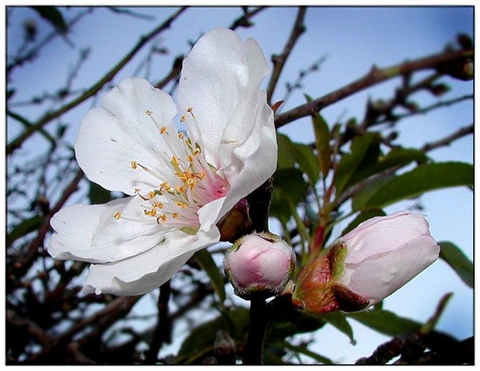 "фото ""Весна"" метки: природа, цветы"