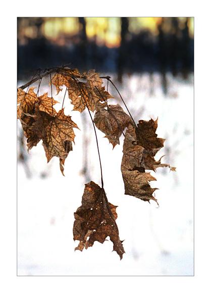 "фото ""Time goes"" метки: пейзаж, природа, зима, цветы"