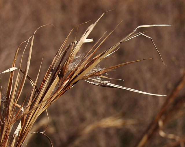 "photo ""Tall Grasses"" tags: macro and close-up, nature, flowers"