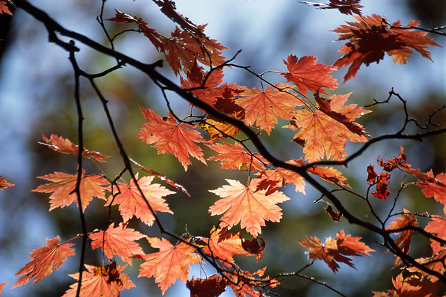 "фото ""Краски осени"" метки: пейзаж, природа, осень, цветы"