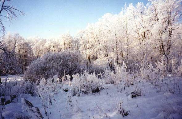 """фото """"Зимушка-зима"""" метки: пейзаж, зима"""