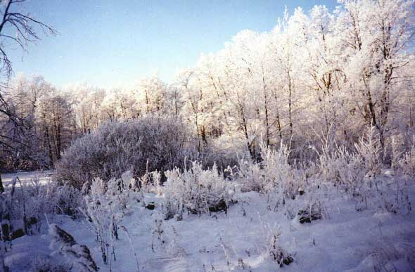 "photo ""Winter-winter"" tags: landscape, winter"