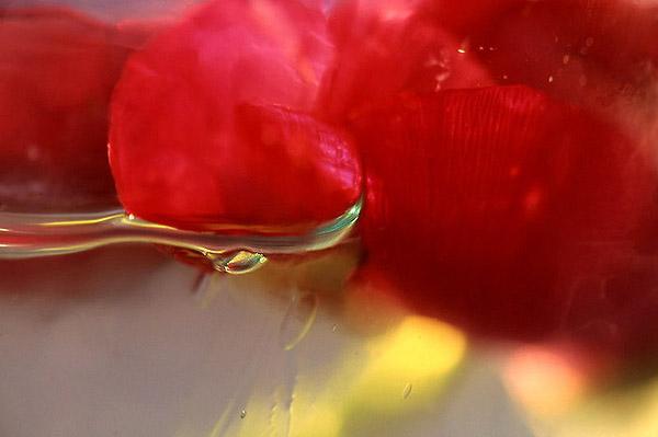 "photo ""Ophelia"" tags: abstract, macro and close-up,"