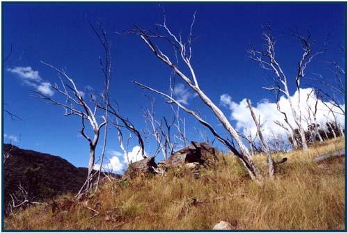 """фото """"Деревья"""" метки: путешествия, пейзаж, Австралия, горы"""