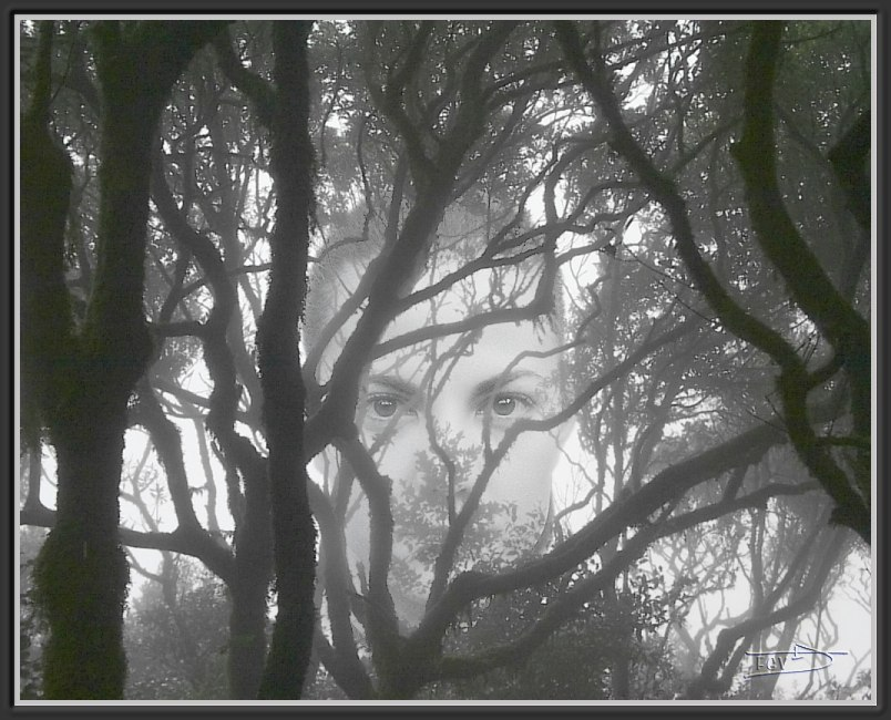 """photo """"Forest"""" tags: montage, nature,"""