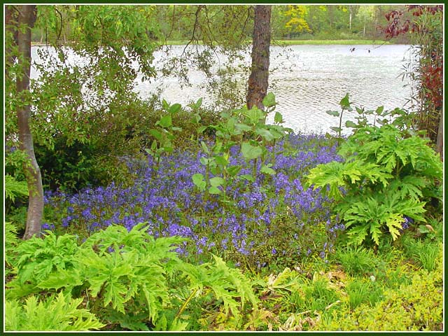 """photo """"Bluebells"""" tags: landscape, nature, flowers, spring"""