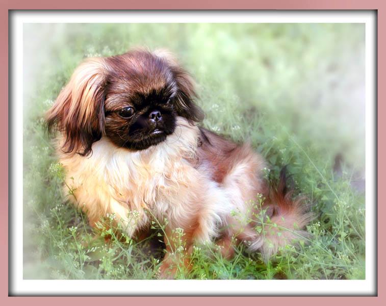 """фото """"Парадный портрет моей любимой модели"""" метки: природа, домашние животные"""