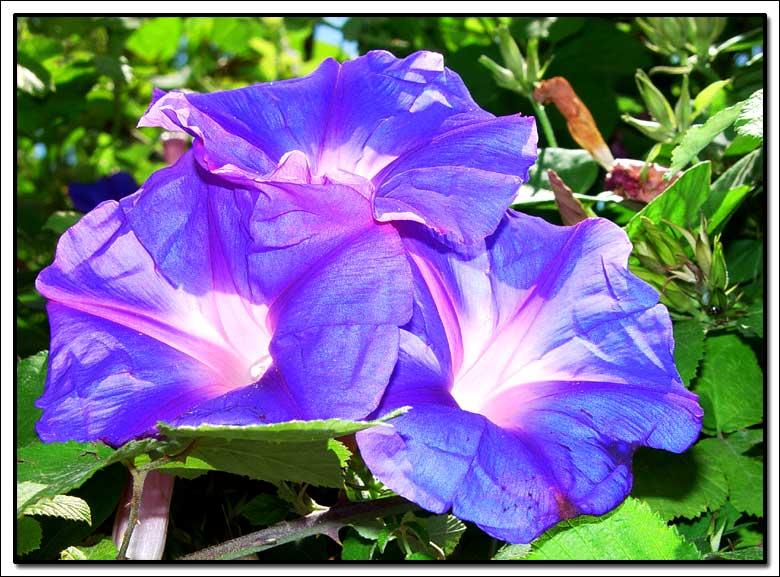 """фото """"Snerles"""" метки: природа, макро и крупный план, цветы"""