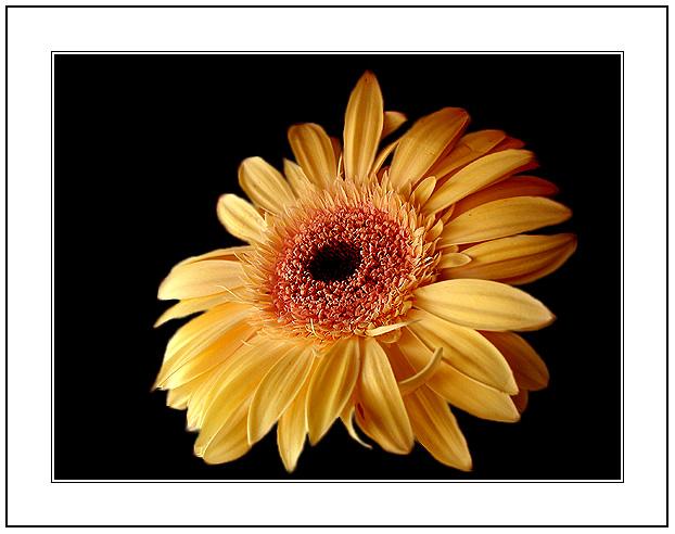 """фото """"Only a Flower"""" метки: макро и крупный план,"""