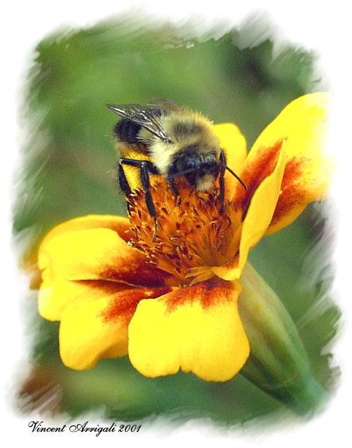 """фото """"Eating out"""" метки: макро и крупный план, природа, насекомое"""