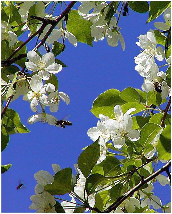 """фото """"Цветение"""" метки: пейзаж, природа, весна, цветы"""