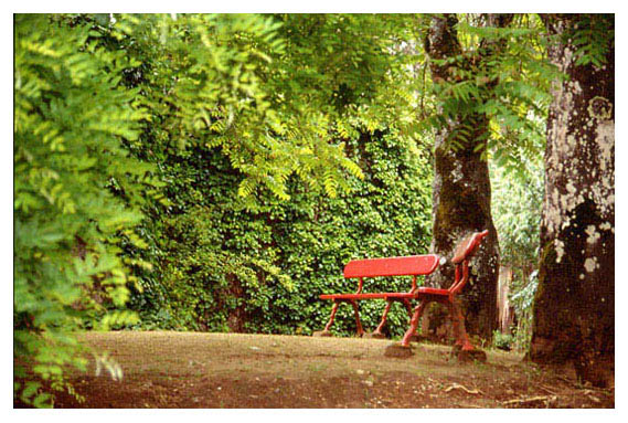 """photo """"Evora Gardens"""" tags: nature, flowers"""