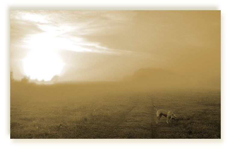 """photo """"Early, foggy... #2"""" tags: landscape, nature, sunset"""