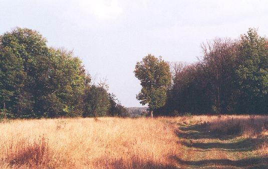 """photo """"Canvas, oil."""" tags: landscape, autumn"""