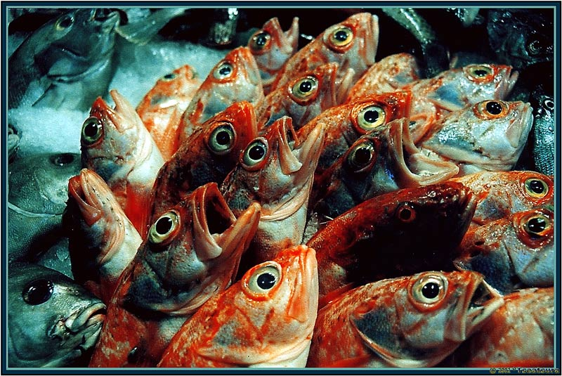 """photo """"The Singing Fishes"""" tags: abstract, still life,"""