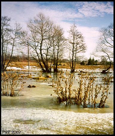 """фото """"Весеннее половодье"""" метки: пейзаж, весна, вода"""
