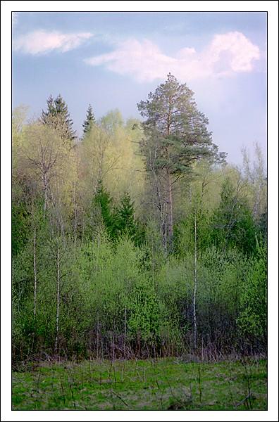 """фото """"Весенняя акварель"""" метки: пейзаж, весна, лес"""