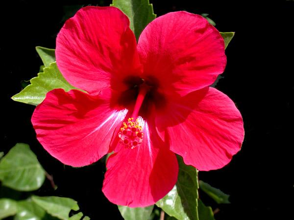 """фото """"Flowers 13"""" метки: макро и крупный план, природа, цветы"""