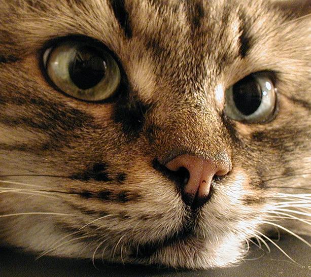 """фото """"Взгляд"""" метки: природа, домашние животные"""