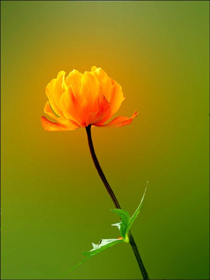 """фото """"Рыжий"""" метки: природа, цветы"""