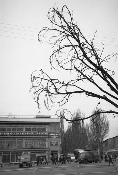 "photo ""Octopus."" tags: misc., architecture, landscape,"