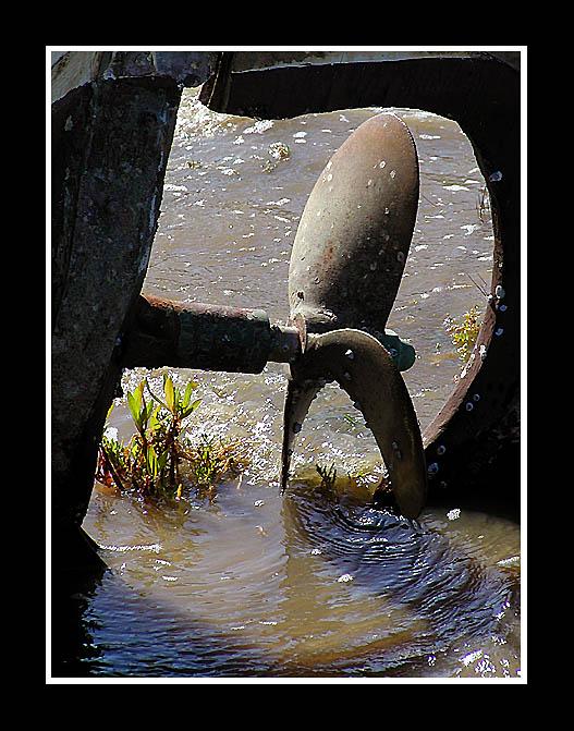 """фото """"Green Peace"""" метки: пейзаж, вода"""