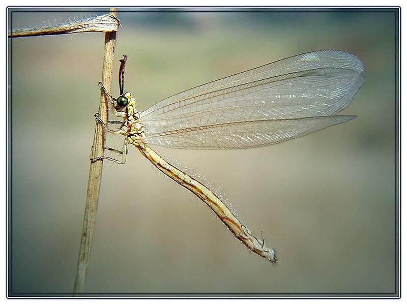 """фото """"Унесённая ветром"""" метки: природа,"""