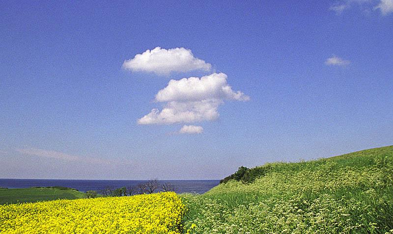 "фото ""Yellow and green fields"" метки: пейзаж, лето, облака"