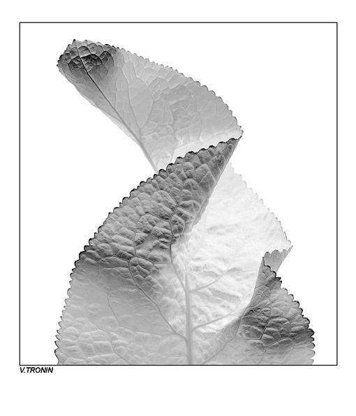"фото ""Композиция."" метки: природа, абстракция, цветы"