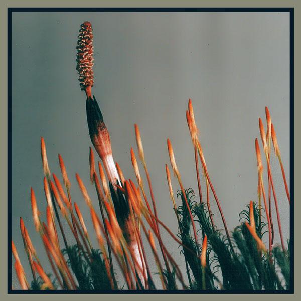 """фото """"The upstart"""" метки: макро и крупный план, природа, цветы"""