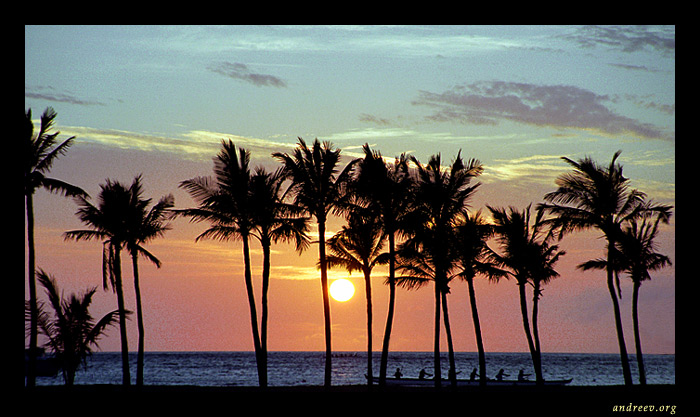 "photo ""Hawaiian series: Palmy sunset"" tags: travel, landscape, North America, sunset"