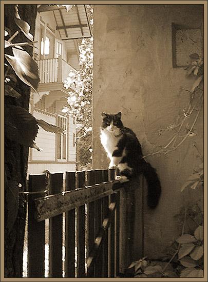 """фото """"Composition with cat."""" метки: пейзаж, природа, домашние животные, лето"""