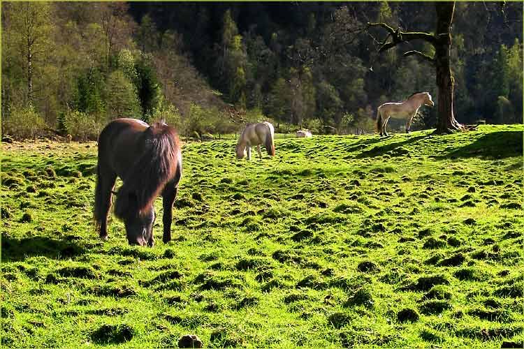 """фото """"Horses"""" метки: природа, разное, домашние животные"""
