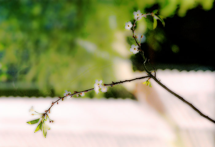 "photo ""Spring flourish-)"" tags: nature, montage, flowers"