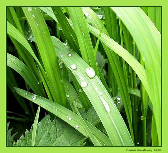 "фото ""Зелёнка"" метки: природа, цветы"
