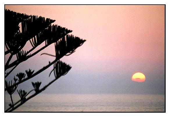 """фото """"tree"""" метки: пейзаж, закат"""