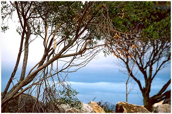 "фото ""Landscape"" метки: природа,"