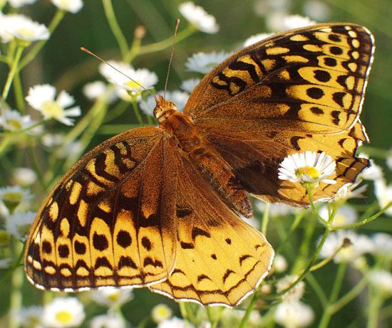 """фото """"Temporary Flight Delay"""" метки: макро и крупный план, природа, насекомое"""