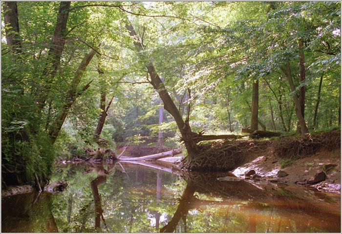 """фото """"Many shades of green....(Part II)"""" метки: пейзаж, лес"""