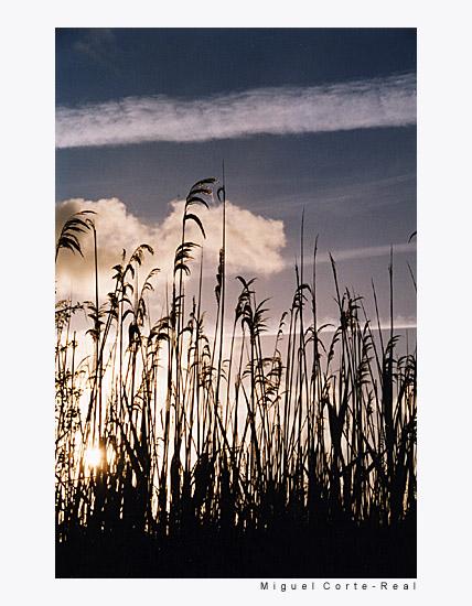 "фото ""one more day"" метки: пейзаж, закат"