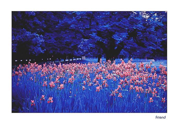 "фото ""Red butterflies in the night"" метки: природа, пейзаж, лето, цветы"