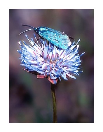 "photo ""Blue over blue"" tags: macro and close-up, nature, insect"