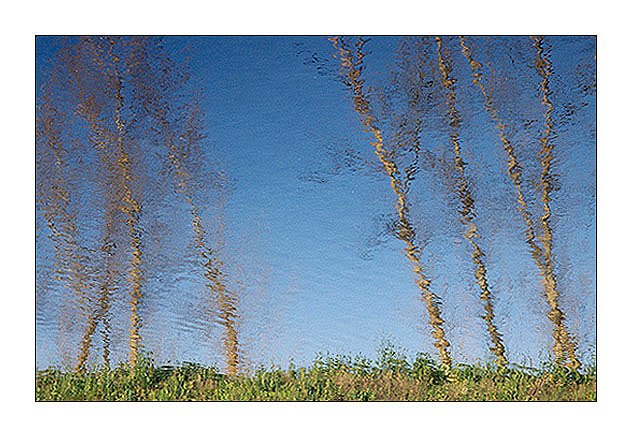 """фото """"Dancing trees..."""" метки: пейзаж, абстракция, вода"""