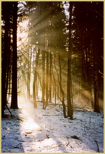 "фото ""За углом весна"" метки: пейзаж, весна, лес"